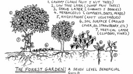 Permaculture – The Way Forward