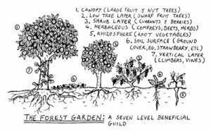 forestgarden