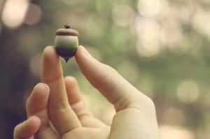 acorn-simple.jpg