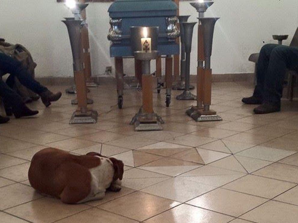ht_dogs_funeral_02_jc_150330_4x3_992.jpg