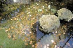 coin_pond.jpg