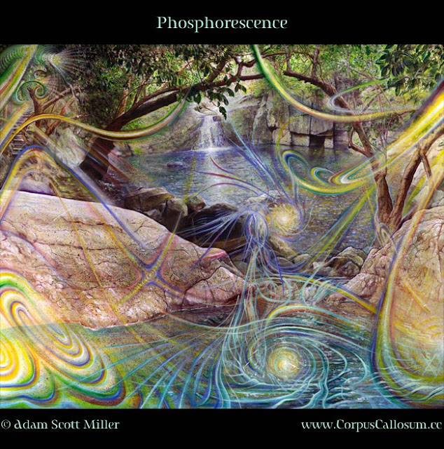 Phosphorescence-By-Adam-Scott-Miller.jpg