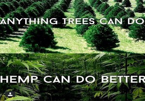 Hemp-Could-Free-Us-From-Oil-Prevent-Deforestation-Cure-Cancer-300x210.jpg