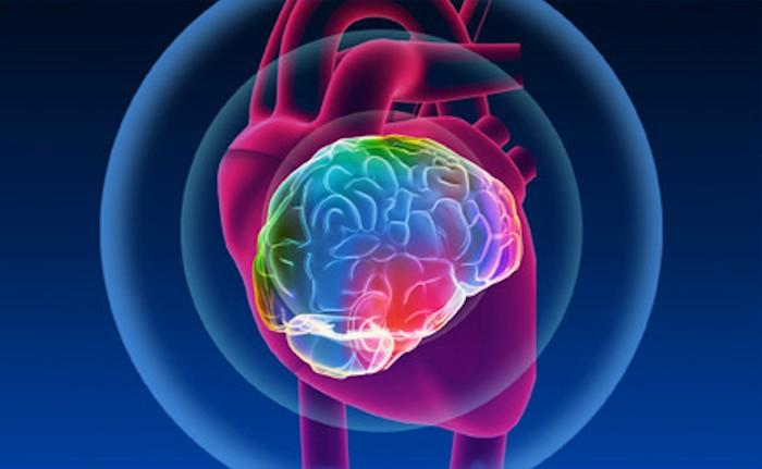 heart-brain.jpg