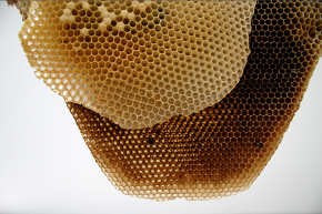 large_honeycombcloseup.jpg