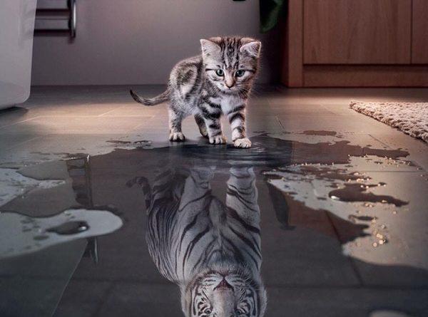 cat-humor-believe-in-yourself-kitten-tiger-600x445.jpg