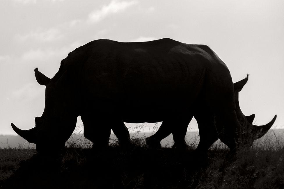 Confusion Rudi Hulshof, South Africa