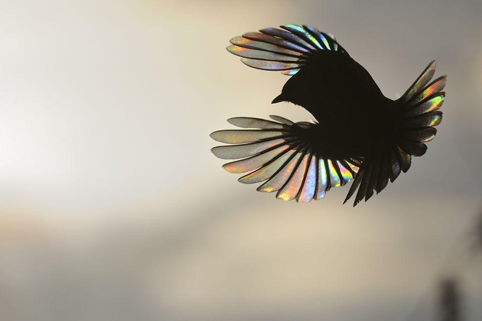 Rainbow wings Victor Tyakht, Russia