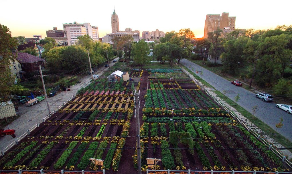 Michigan-Urban-Farming-Initiative-Garden-1020x610.jpg