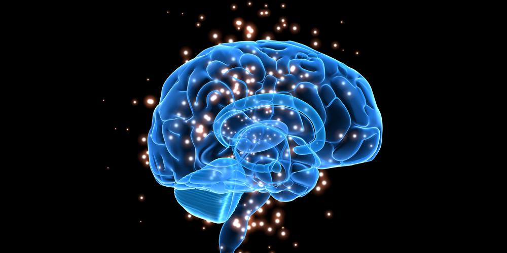 brain-1-1
