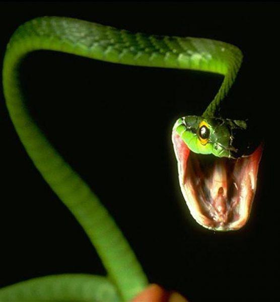 snakepois2-1-556x600