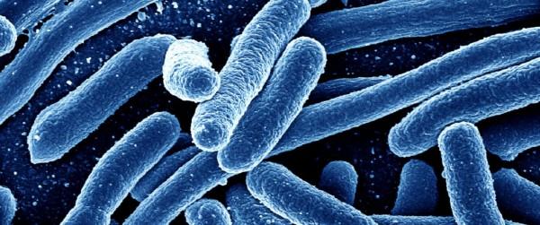 superbug-e1486816819754