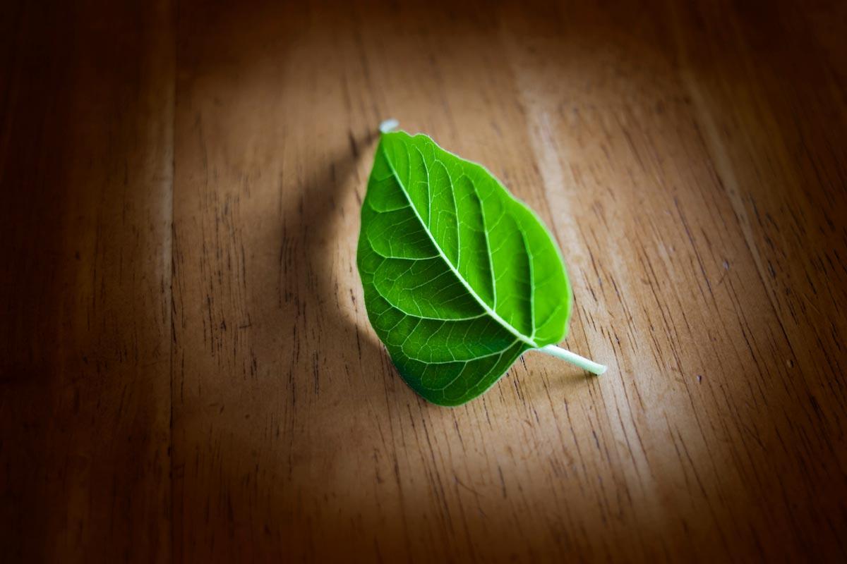 Leaf-On-The-Floor