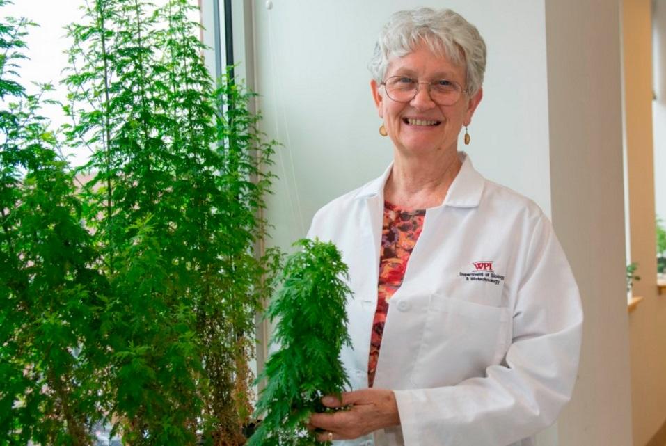 WPI-artemisia-malaria-herb