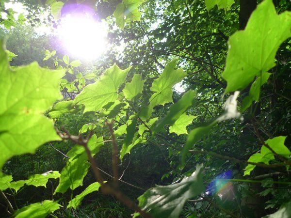 Photosynthesis-e1495433634139