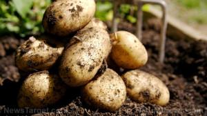 Potatoes-Soil