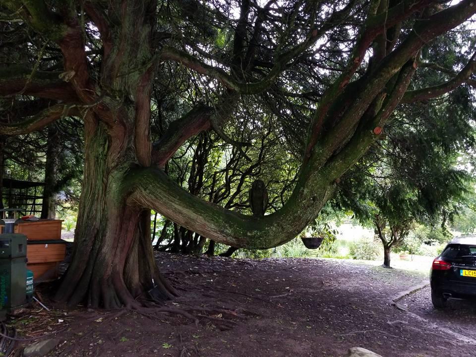 kirnan+house+tree+scotland