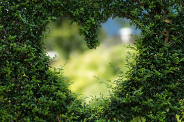 heart-1192662-960-720