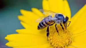 Close-Up-Of-Bee-Flower-Pollen