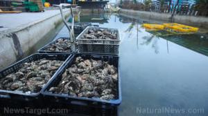 Oyster-Farm