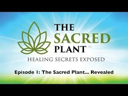 The Sacred Plant... Revealed